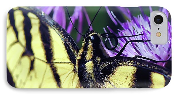Eastern Tiger Swallowtail Butterfly Macro IPhone Case