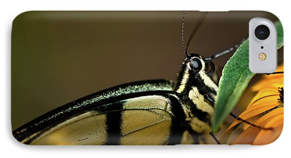 Eastern Tiger Swallowtail Butterfly IPhone Case by  Onyonet  Photo Studios