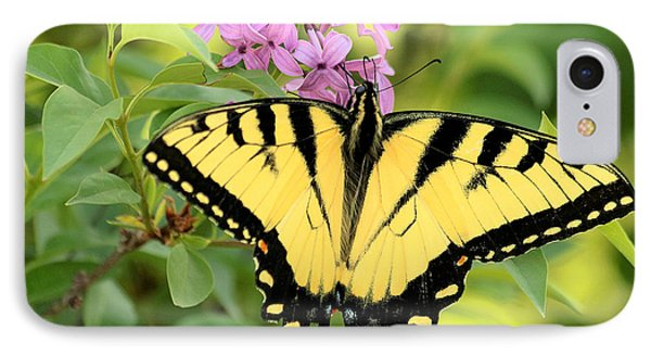 Eastern Tiger Swallowtail Butterfly IPhone Case by Sheila Brown