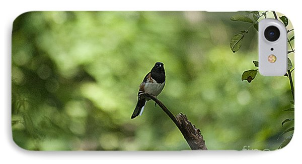Eastern Towhee 20120707_52a IPhone Case by Tina Hopkins