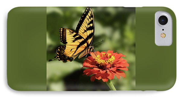 Eastern Yellow Swallowtail IPhone Case