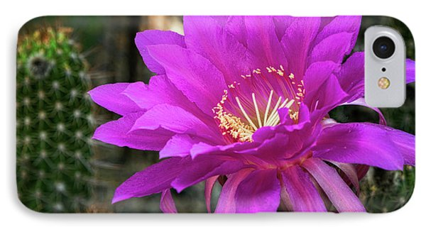 IPhone Case featuring the photograph Echinopsis In Hot Pink  by Saija Lehtonen