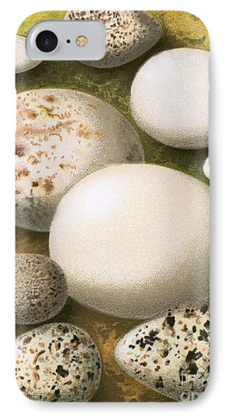 Sandpiper iPhone 7 Case - Eggs by English School