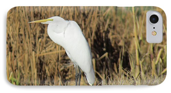 Egret In Grass IPhone Case by Bonnie Muir