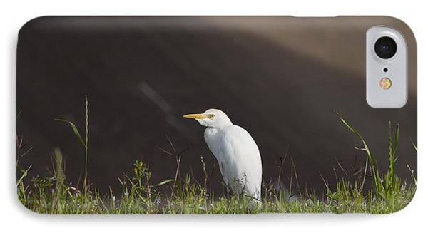 IPhone Case featuring the photograph Egret In The City by Joshua House