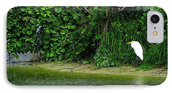 Egret Wakodahatchee Florida Wetlands IPhone Case