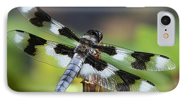 Eight-spotted Skimmer  IPhone Case by Sharon Talson