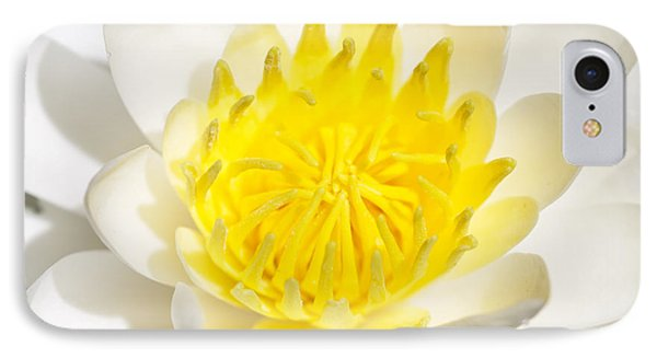 Elegant Lotus IPhone Case by Christopher L Thomley