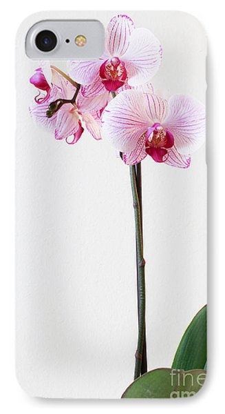 Elegant Orchid IPhone Case by Anita Oakley