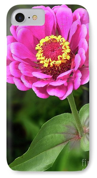 Elegant Zinnia Soft Glow IPhone Case