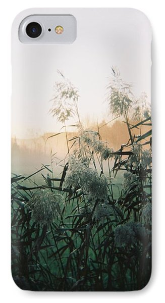 Elephant Grass At Dawn IPhone Case