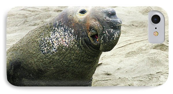IPhone Case featuring the photograph Elephant Seal by Anthony Jones