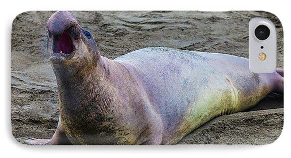 Elephant Seal Bull IPhone Case