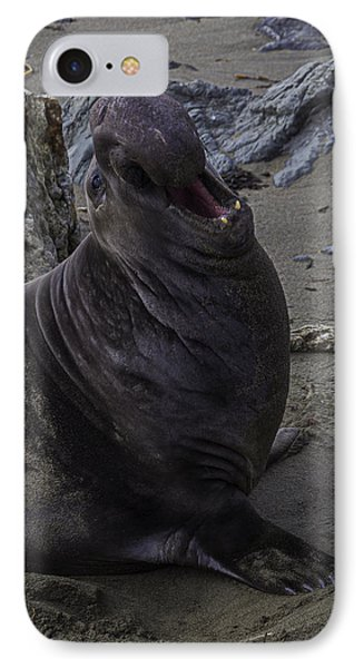 Elephant Seal Calling IPhone Case by Garry Gay