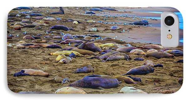 Elephant Seal Coloney IPhone Case