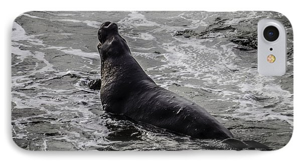 Elephant Seal In Surf IPhone Case by Garry Gay