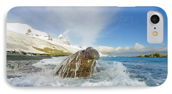 Elephant Seal In The Surf IPhone Case by Yva Momatiuk and John Eastcott