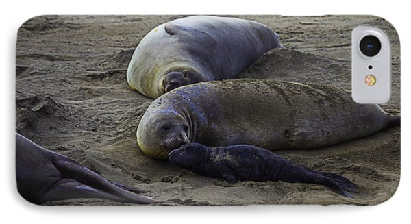 Elephant Seal Mom And Pup IPhone Case by Garry Gay