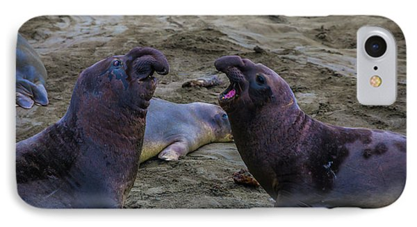 Elephant Seals Challenging Each Other IPhone Case