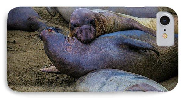 Elephant Seals Fighting IPhone Case