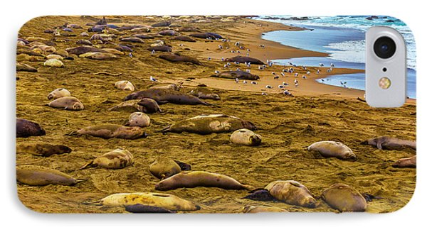Elephant Seals Near Cambria  IPhone Case by Garry Gay