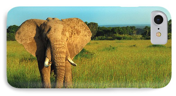 Elephant IPhone Case by Sebastian Musial