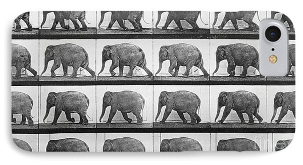 Elephant Walking IPhone 7 Case by Eadweard Muybridge