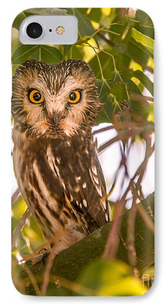 Elf Owl IPhone Case