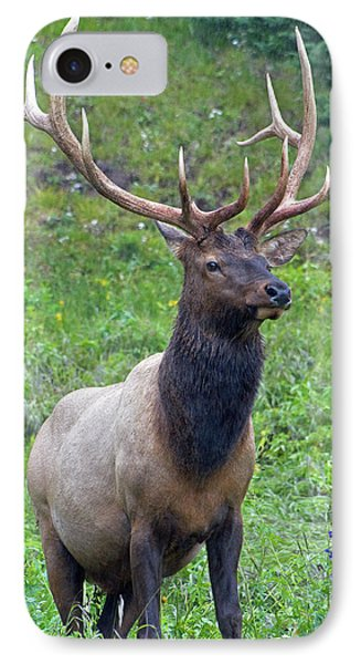 IPhone Case featuring the photograph Elk 5 by Gary Lengyel