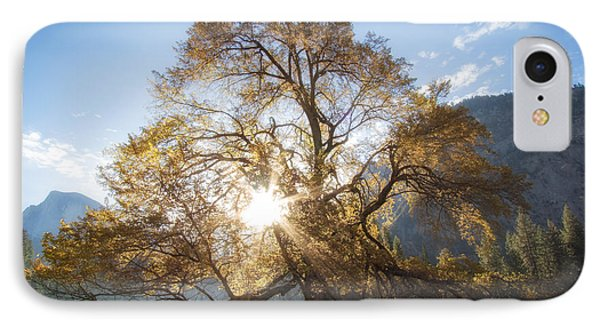 Elm Tree  IPhone Case