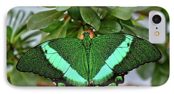 Emerald Swallowtail Butterfly IPhone Case by Ronda Ryan