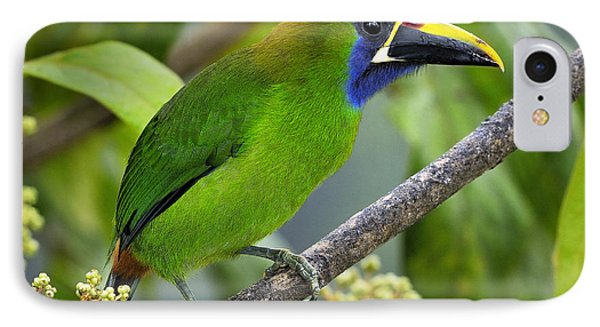 Emerald Toucanet IPhone Case by Tony Beck