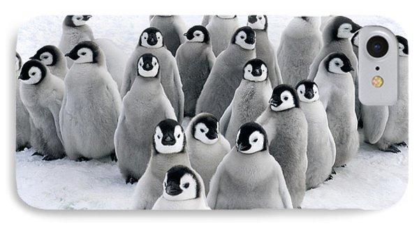Emperor Penguin Chicks IPhone Case