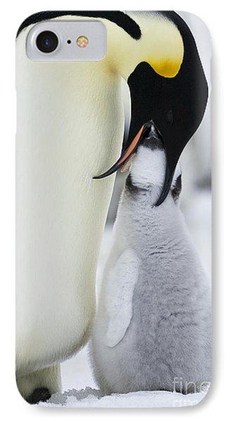 Emperor Penguin Feeding Chick IPhone Case by Jean-Louis Klein & Marie-Luce Hubert