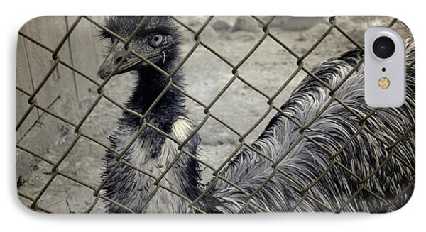 Emu At The Zoo IPhone Case by Luke Moore