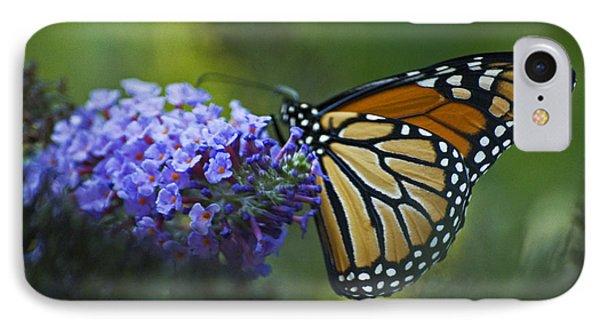Enchanting Monarch IPhone Case by Elsa Marie Santoro