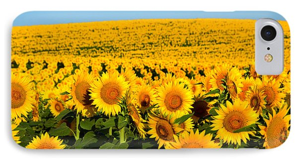 Endless Sunflowers IPhone Case by Catherine Sherman