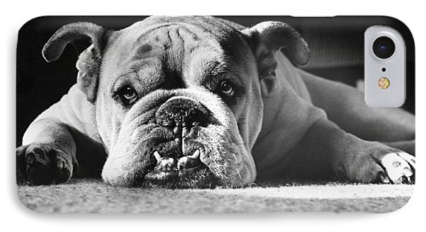 English Bulldog IPhone Case by M E Browning and Photo Researchers