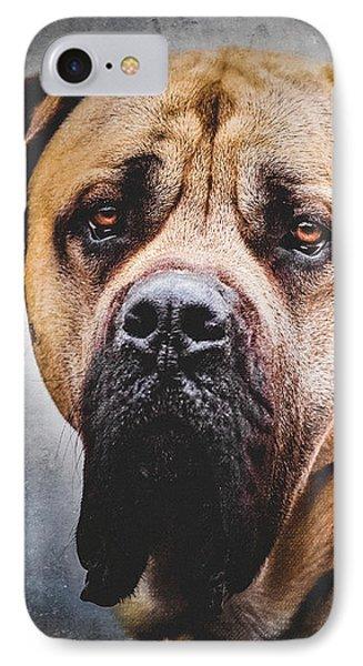 English Mastiff Dog Portrait IPhone Case by Debi Bishop