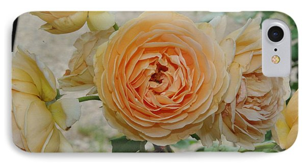 English Rose Apricot Crown Princess Margareta 2 IPhone Case