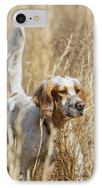 English Setter IPhone Case by Chip Laughton
