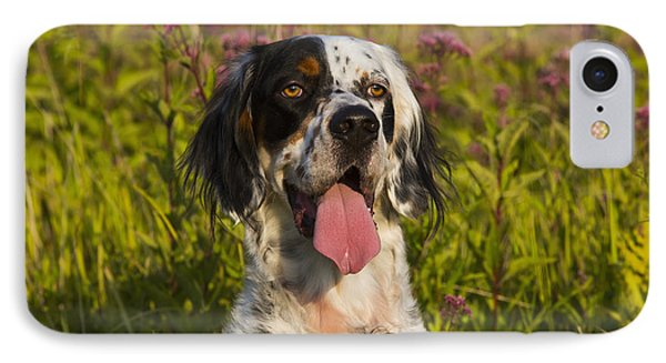 English Setter In Late Summer IPhone Case by Lynn Stone