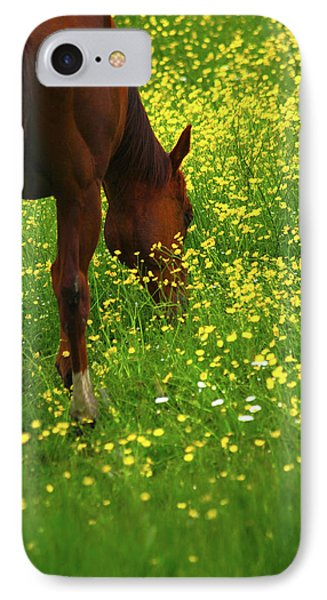 IPhone Case featuring the photograph Enjoying The Wildflowers by Karol Livote