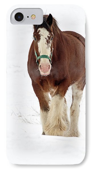 IPhone Case featuring the photograph Equus Caballus.. by Nina Stavlund