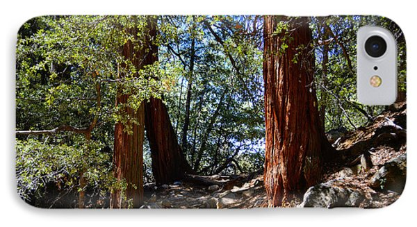 IPhone Case featuring the photograph Ernie Maxwell Scenic Trail - Idyllwild by Glenn McCarthy