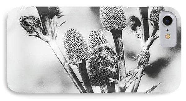 Eryngium #flower #flowers IPhone Case