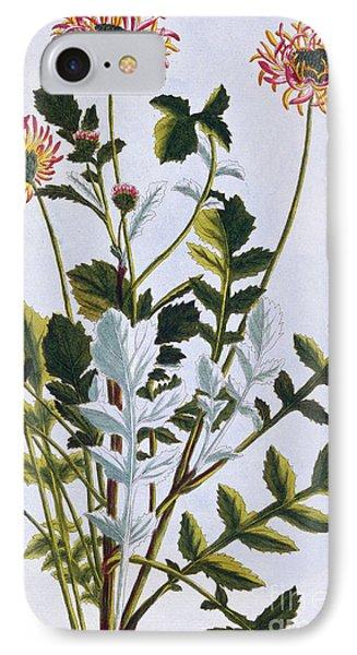 Ethiopian Arcotis  African Lily IPhone Case by Pierre-Joseph Buchoz