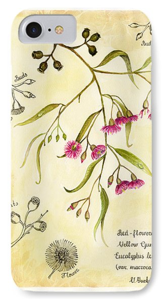 Eucalyptus Branch In  Classical Botanical Art Style IPhone Case by Victoria Yurkova