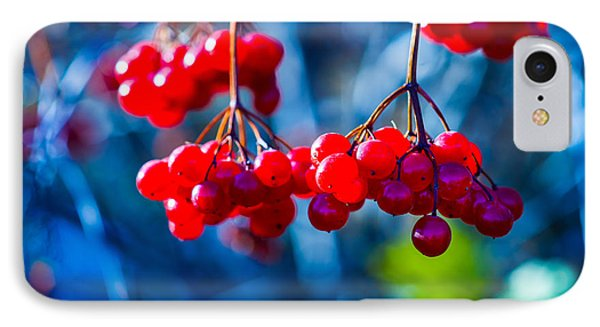 IPhone Case featuring the photograph European Cranberry Berries by Alexander Senin