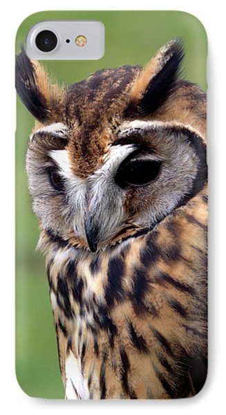 Eurasian Striped  Owl IPhone Case by Stephen Melia